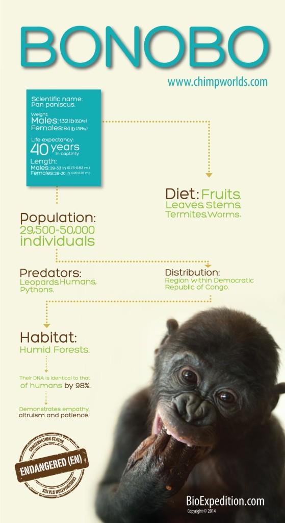 Bonobo-infographic