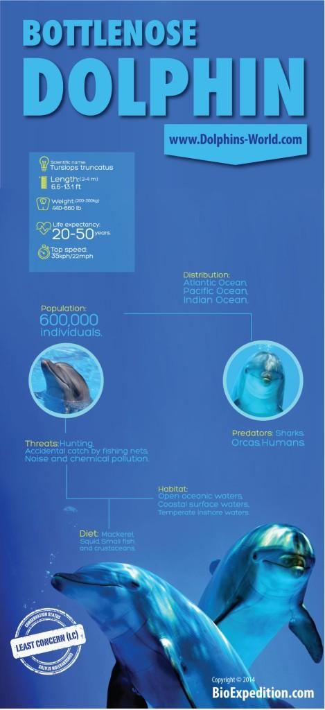 bottlenose-dolphin-infographic