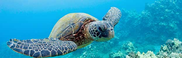 Jellyfish Predators Animal Facts And Information