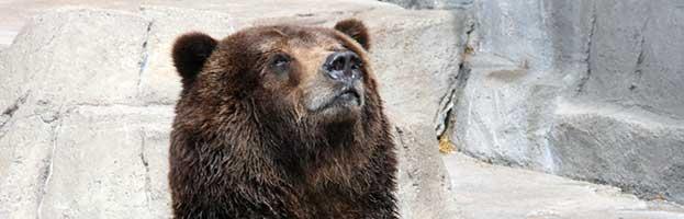 Bear Species