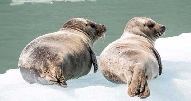 How Intelligent Are Seals?