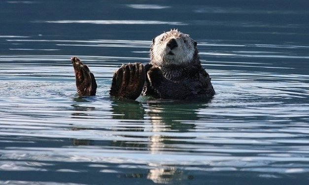 Family Structures of Sea Otters