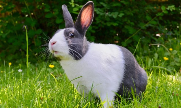 What To Do If You Find A Rabbit Den In Your Yard