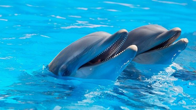 Types of Dolphins