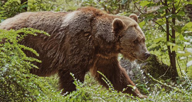 5 Ways to Spot the Difference in Bear Species